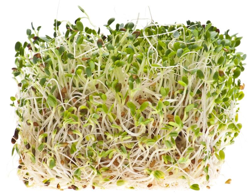 Gout and Alfalfa