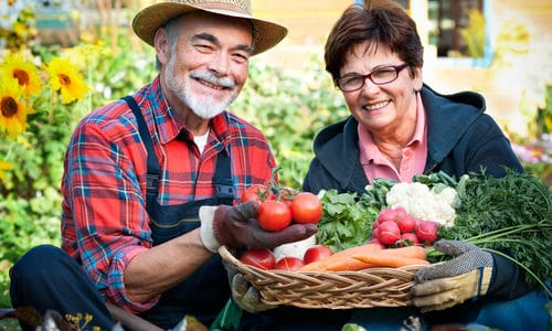 Gout and Vegetable Garden