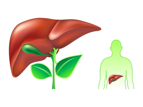 Your Liver and Gout