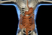 Gout, bacteria and leaky gut
