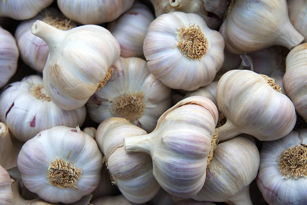 Gout and Garlic